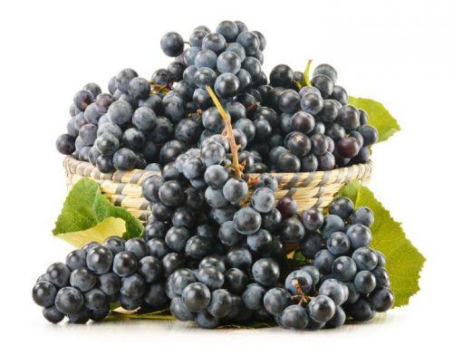 Виноград Чёрный Узбекистан